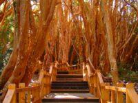 Bosque de Arrayanes – Villa La Angostura – Guía Turística