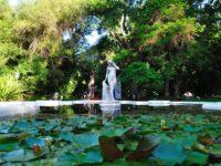 Jardin Botanico de Buenos Aires: Donde y Cómo Visitarlo