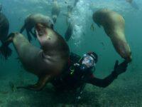 Puerto Madryn Chubut, Toda la informacion sobre un lugar increible