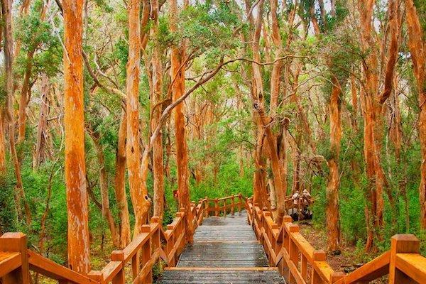 Bosque de Arrayanes, Que hacer en villa la angostura